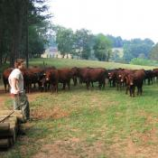 1 Aaron and the Devon Herd.JPG